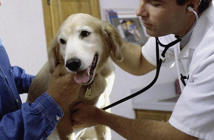 Собачий туберкулез  причины формы болезни симптомы диагностика лечение